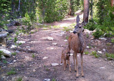 Mom & Baby Deer